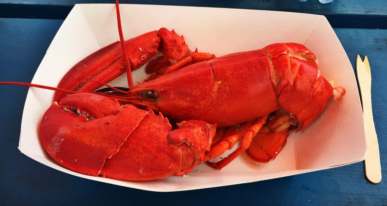 Lobster in Gloucester